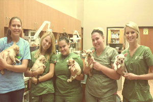 New Clients - Woodland West Animal Hospital